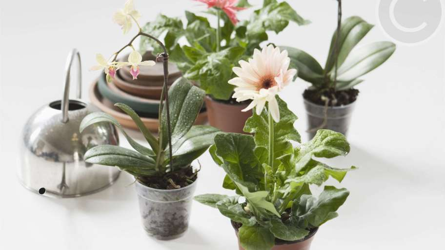 The plants that help purifying the air