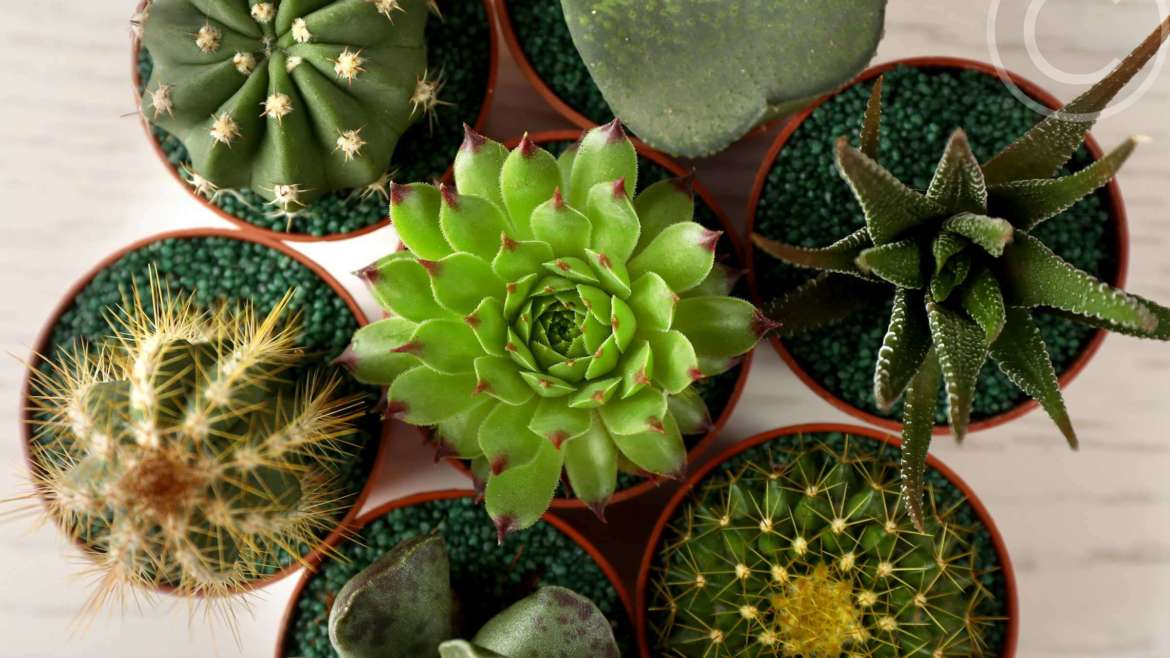 Which plants will like your modern home
